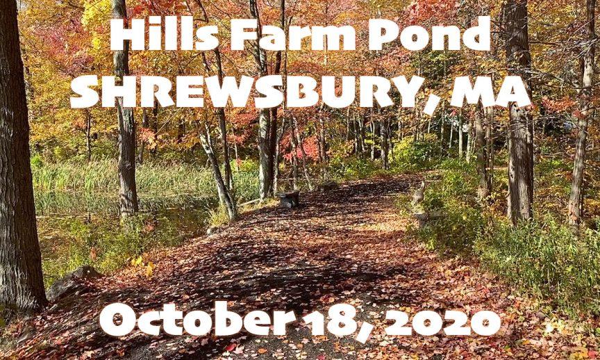 Hills Farm Pond
